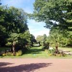 Palmenallee im Botanischen Garten - Flora Köln
